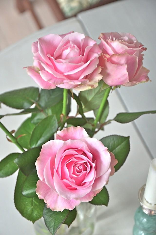 Helgens rosor & Be Dior