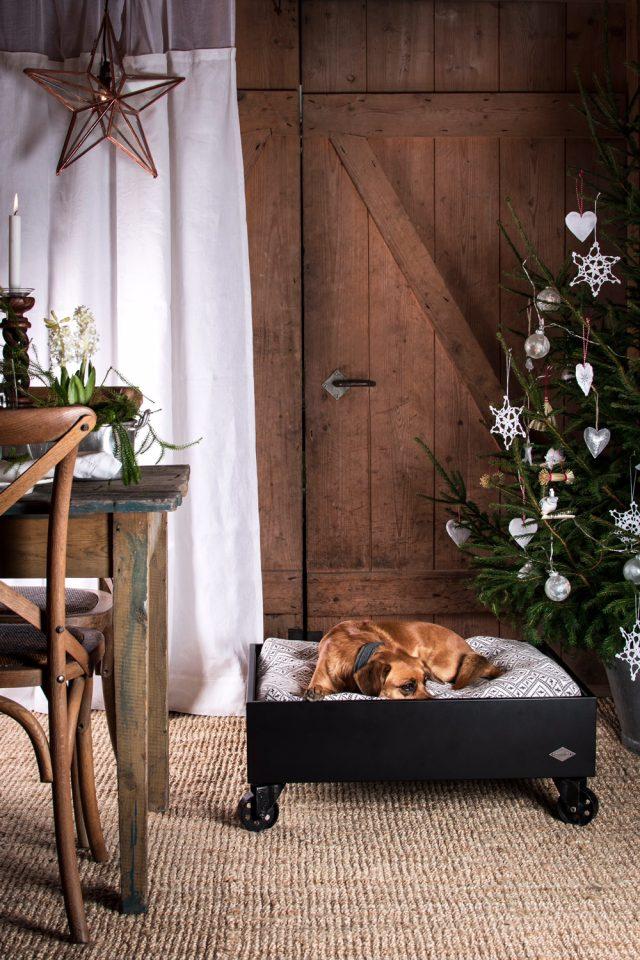 Julklappstips till din hund eller katt