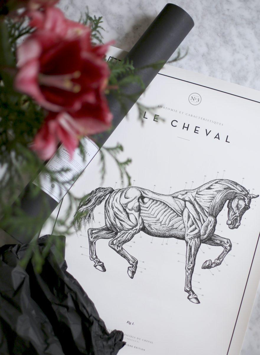 Le Cheval N°3
