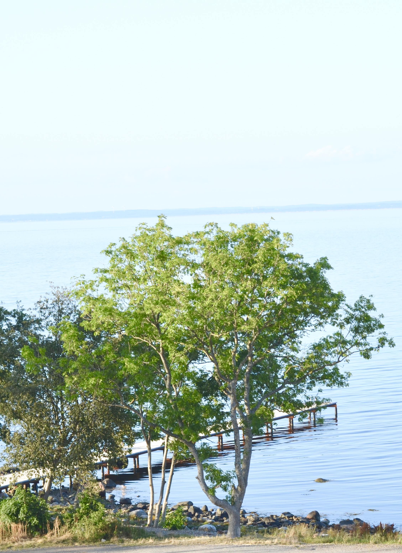 Mississippi Gulf Coast hastighet dating